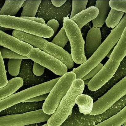 Air born bacteria coli can be found in poor quality air.